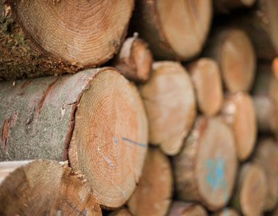 Zuschuss zum Holzverkauf