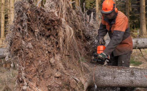 Forstämter und Waldbauverein Daun e. V.