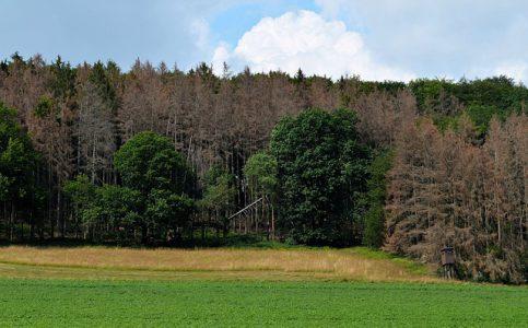 Förderjahr 2020 – Forstämter und Waldbauverein Daun e.V.